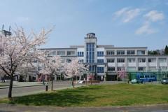 5号館前の桜