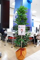 同窓会よりお祝いの観葉植物(シナモンの木)