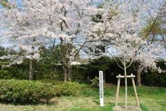 10周年記念寄贈こぶしの木