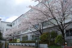 2号館脇の桜